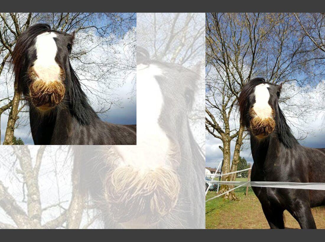 CAV Pferdenasen Peggy Michulski