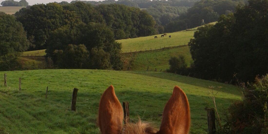 CAV-Pferdeohren-Katharina-Moeller