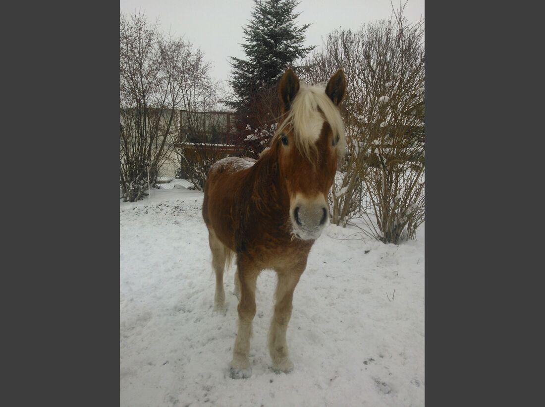 CAV-Pferdeohren-Kerstin-Meinhard
