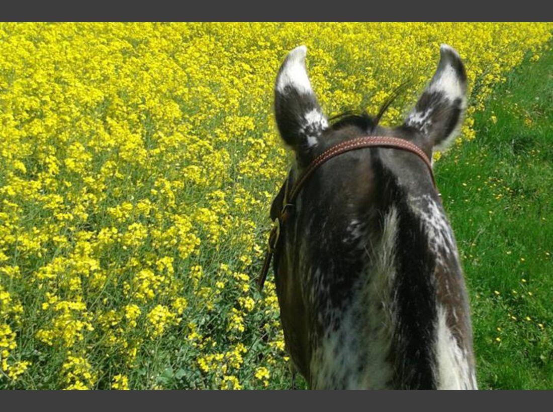 CAV-Pferdeohren-Nina-Blaschke