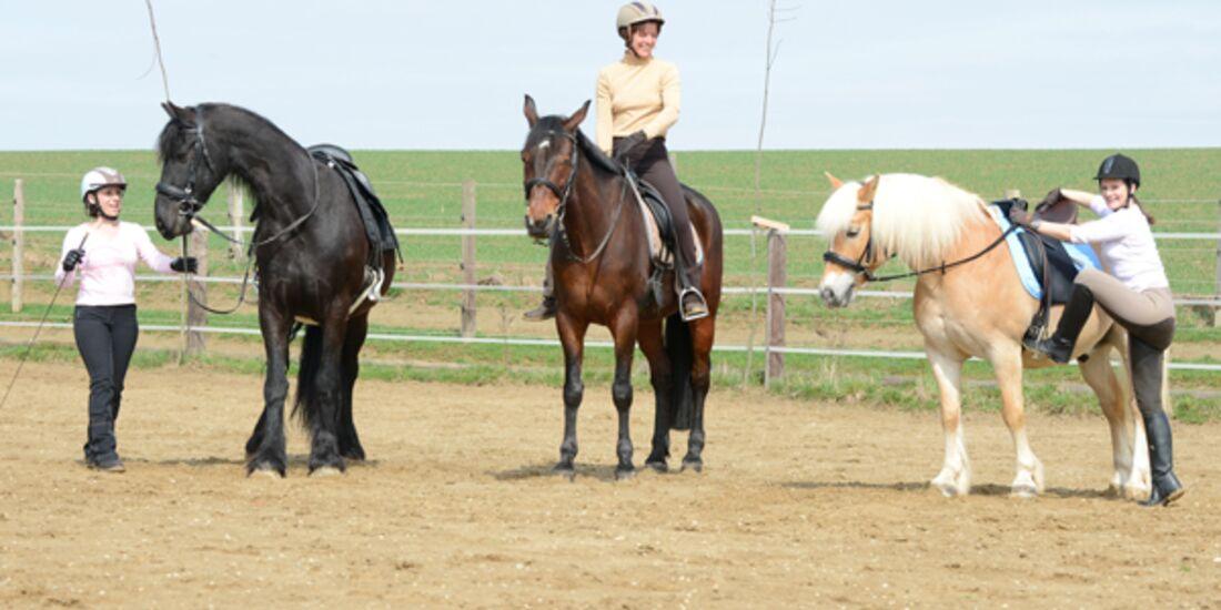 CAV Pferdetausch 1