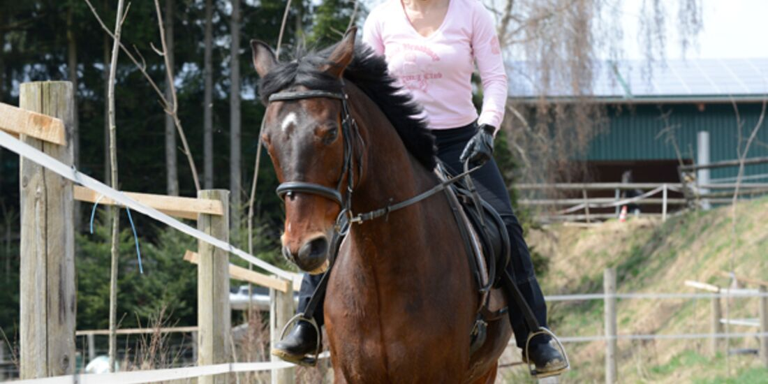 CAV Pferdetausch 2