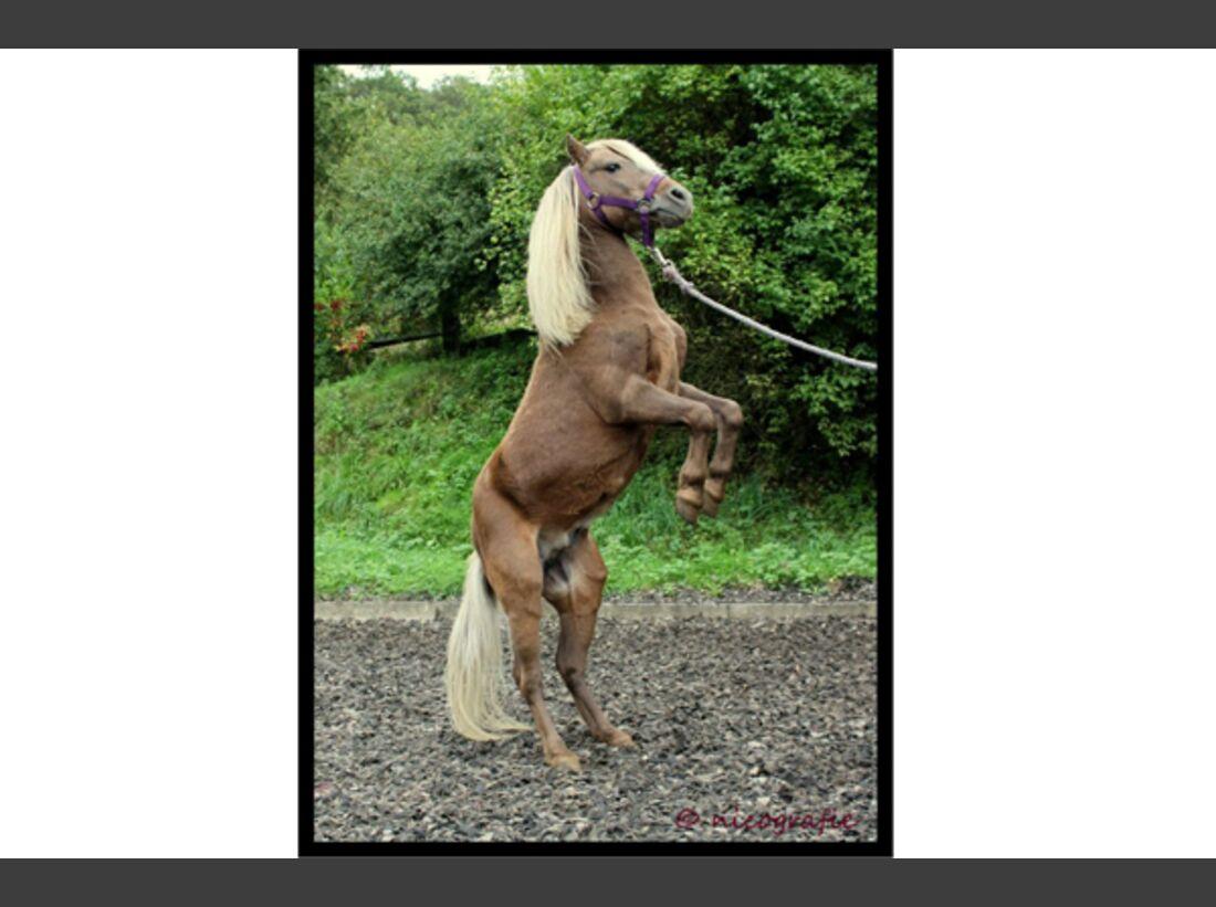 CAV Pony Leserfotos 10