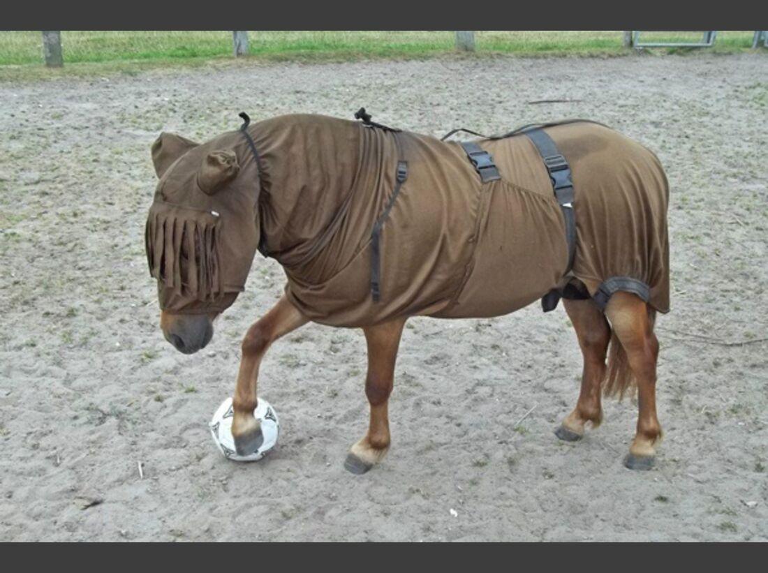CAV Pony Leserfotos 12