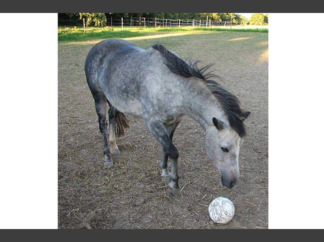 CAV Pony Leserfotos 20