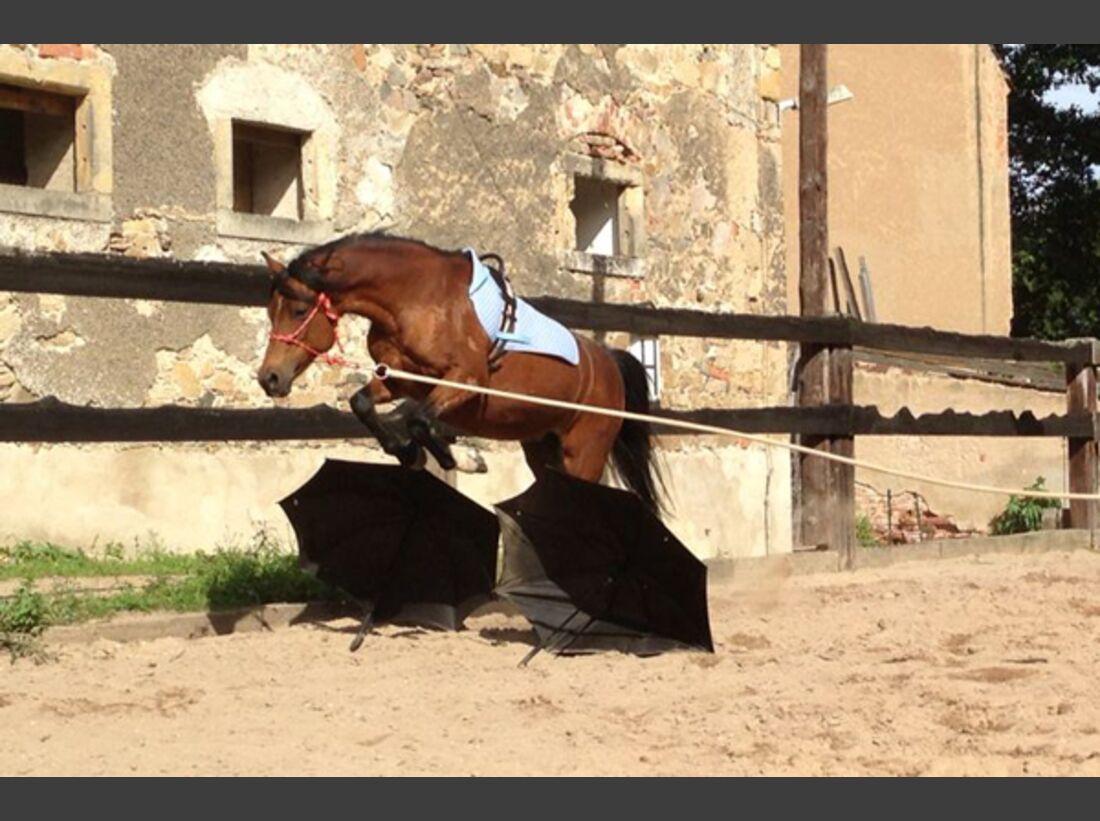 CAV Pony Leserfotos 24
