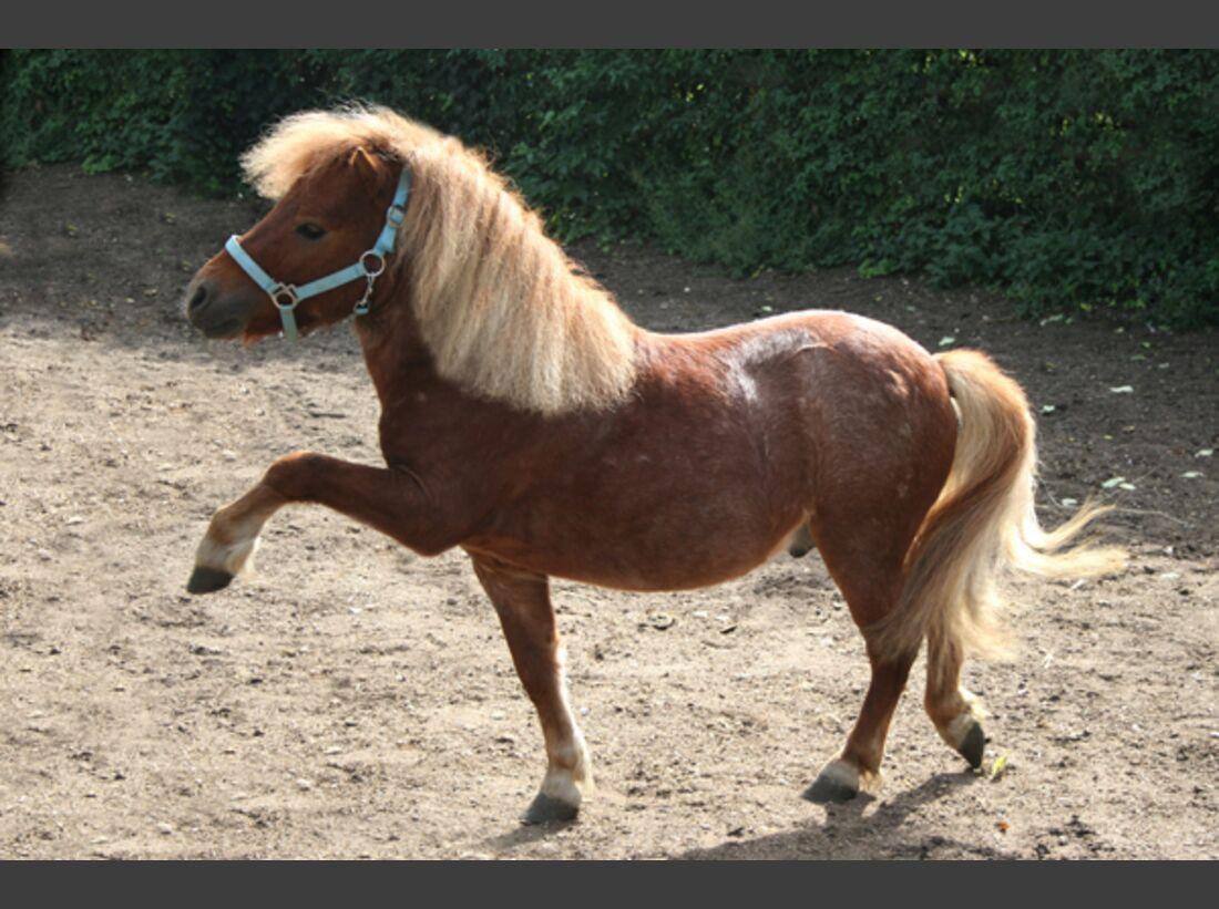CAV Pony Leserfotos 31