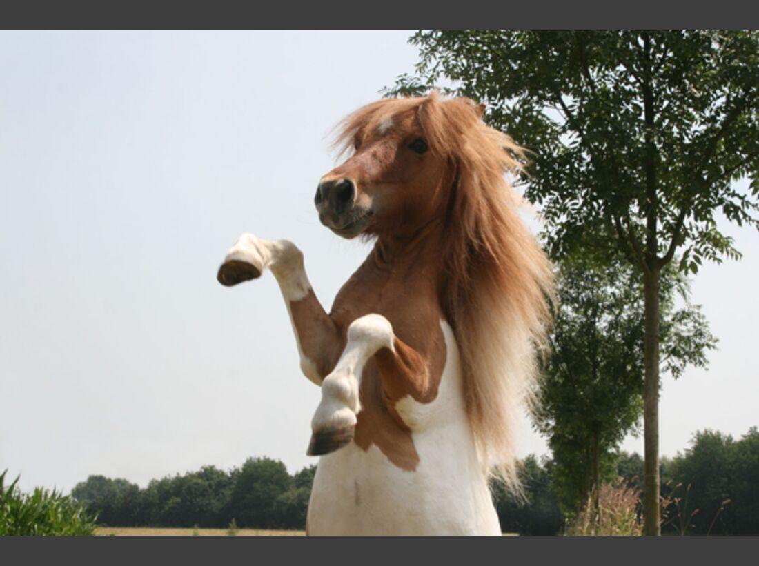 CAV Pony Leserfotos 32