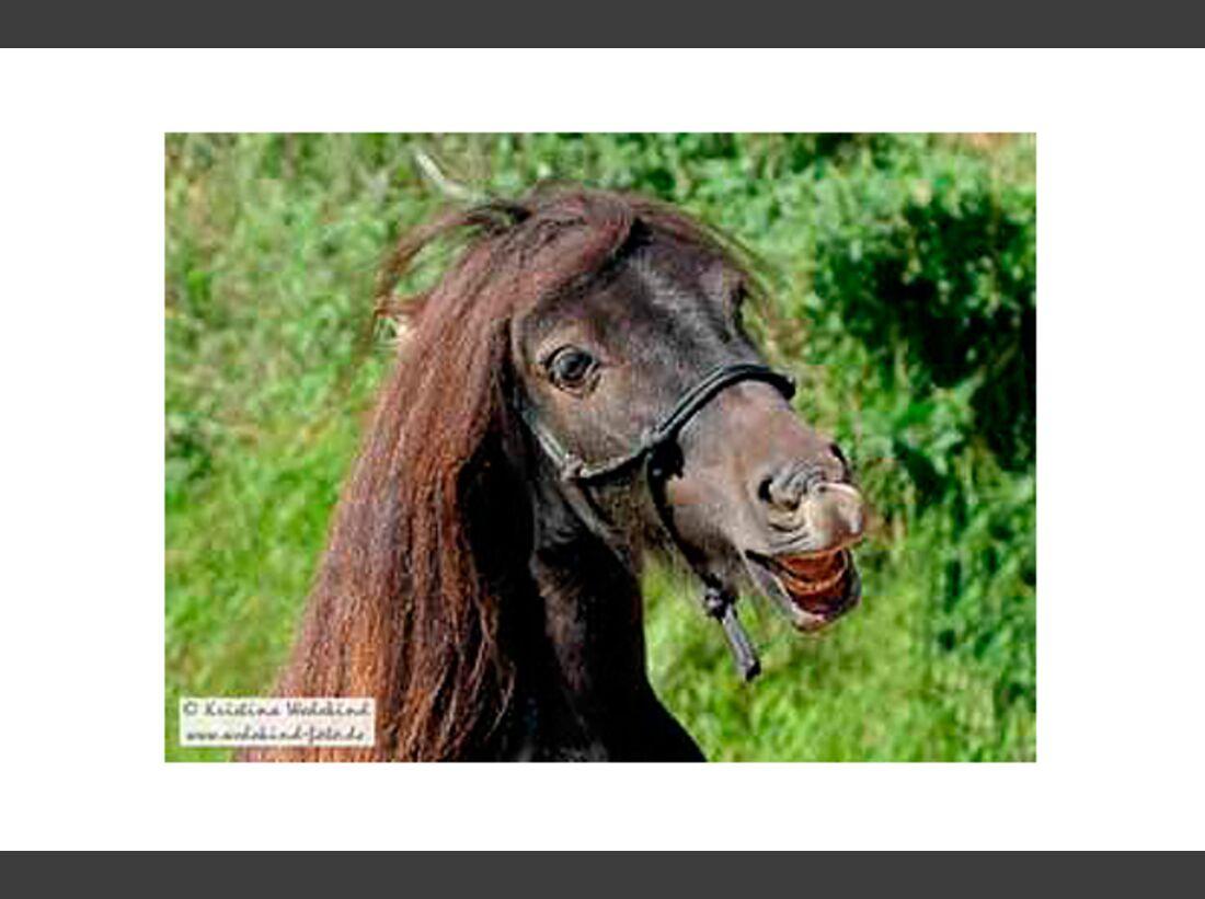CAV Pony Leserfotos 4