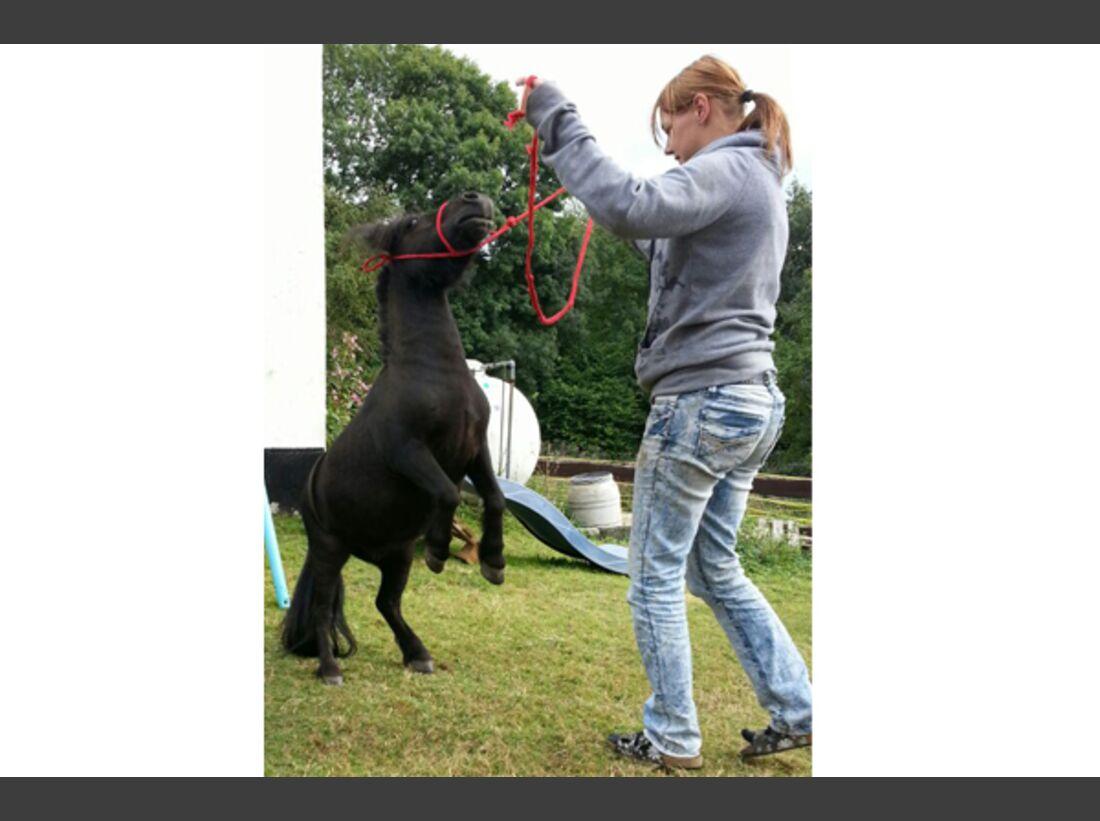 CAV Pony Leserfotos 8