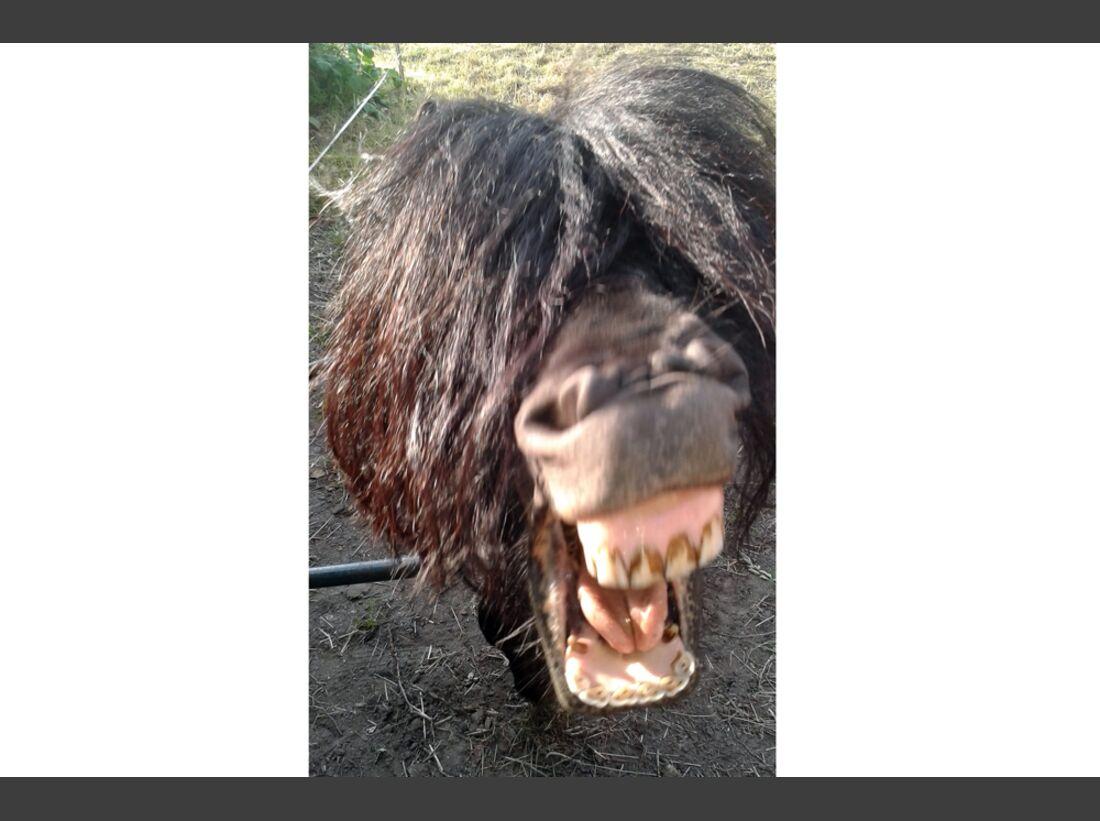 CAV Pony Leserfotos Bianca