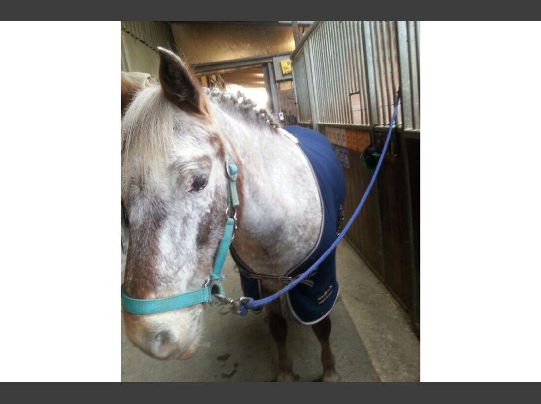 CAV Pony Leserfotos Leonie Brunner