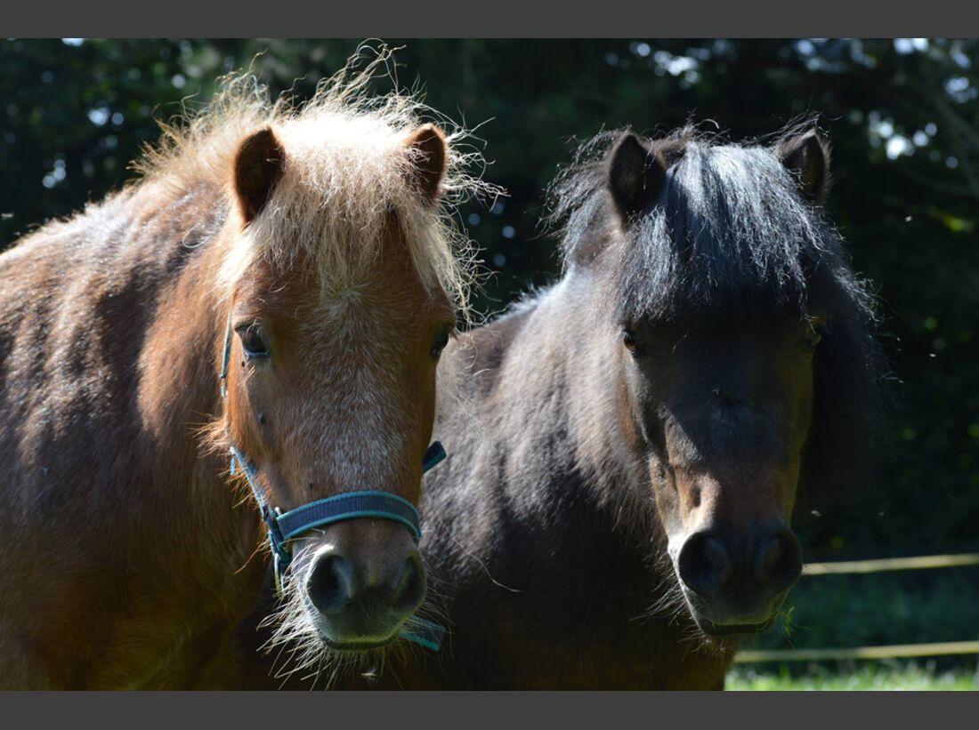 CAV Pony Leserfotos Nadine Lehmann