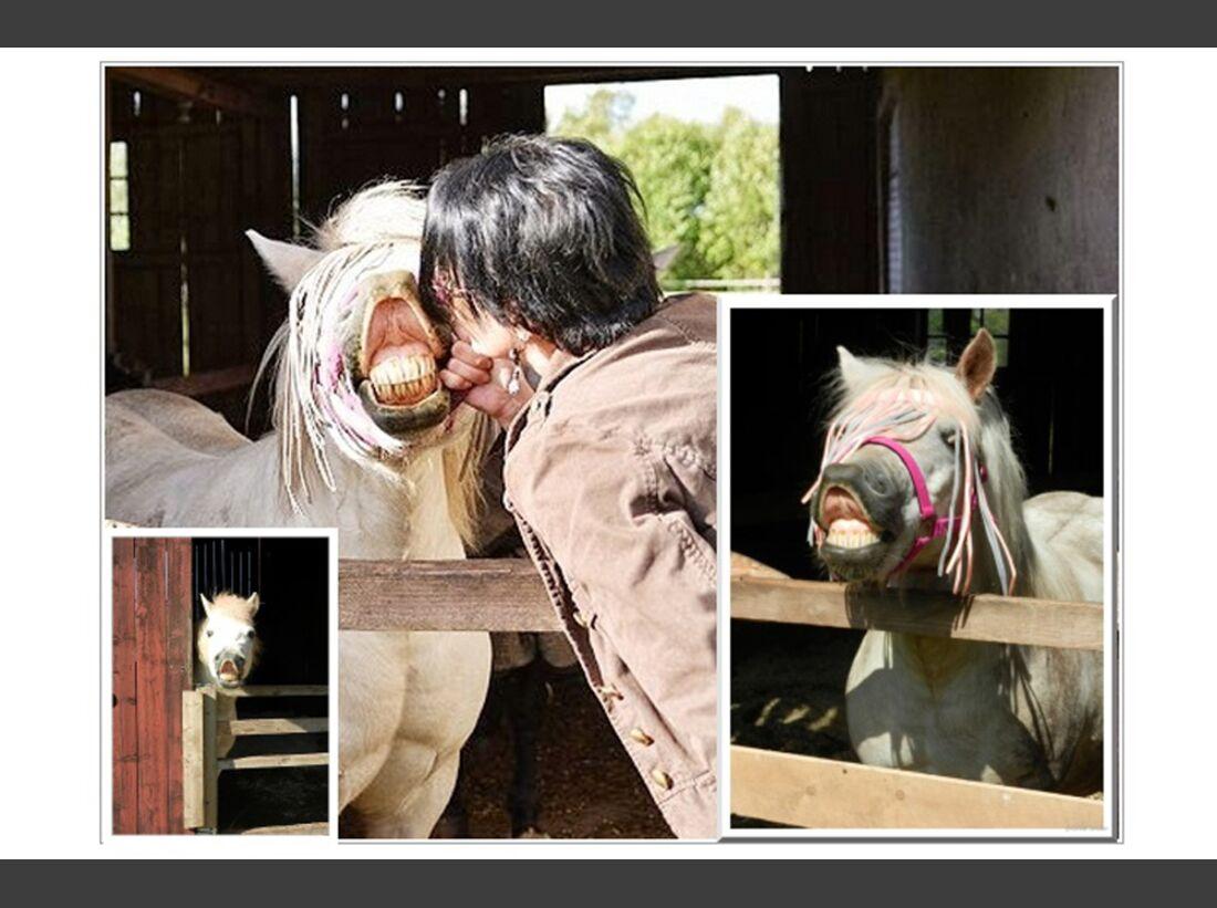 CAV Pony Leserfotos Sylvia Jordan