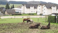 CAV Reitschultest Bergisches Land 12 Oaks Ranch 2