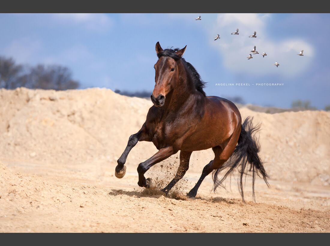 CAV Sandgruben Fotoshooting Angelina Peekel 9