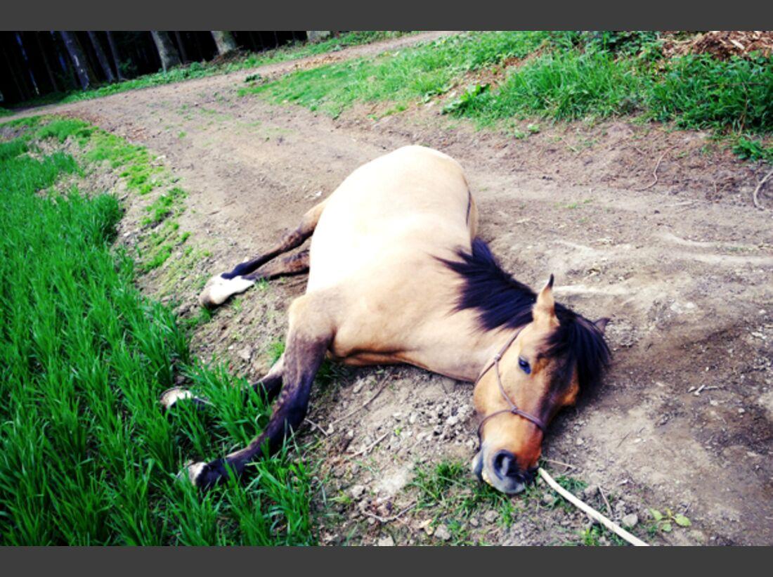 CAV Schräg Witzig Skurril aus der Pferdewelt Pferdefotos 1