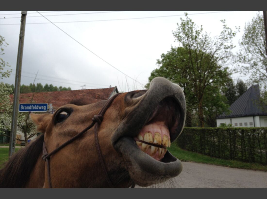 CAV Schräg Witzig Skurril aus der Pferdewelt Pferdefotos 2