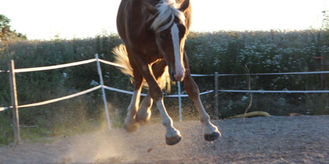 CAV Schräg Witzig Skurril aus der Pferdewelt Pferdefotos 4