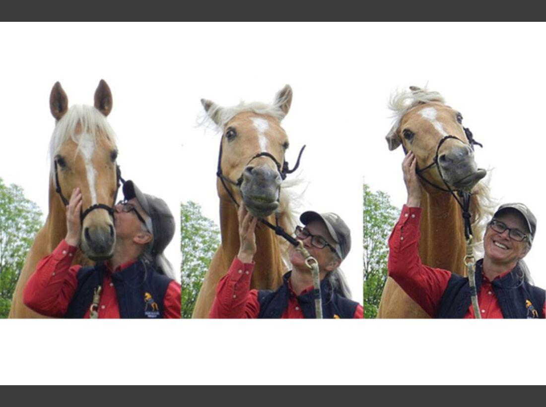 CAV Schräg Witzig Skurril aus der Pferdewelt Pferdefotos 5