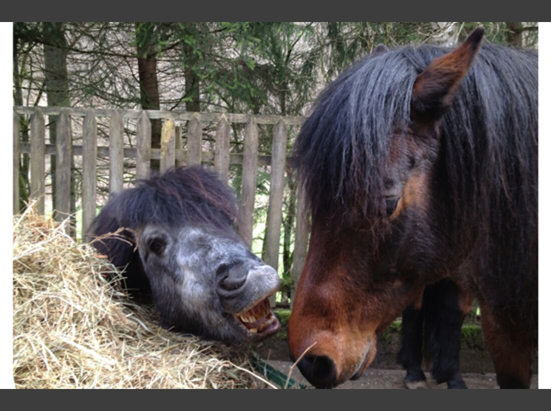 CAV Schräg Witzig Skurril aus der Pferdewelt Pferdefotos 78