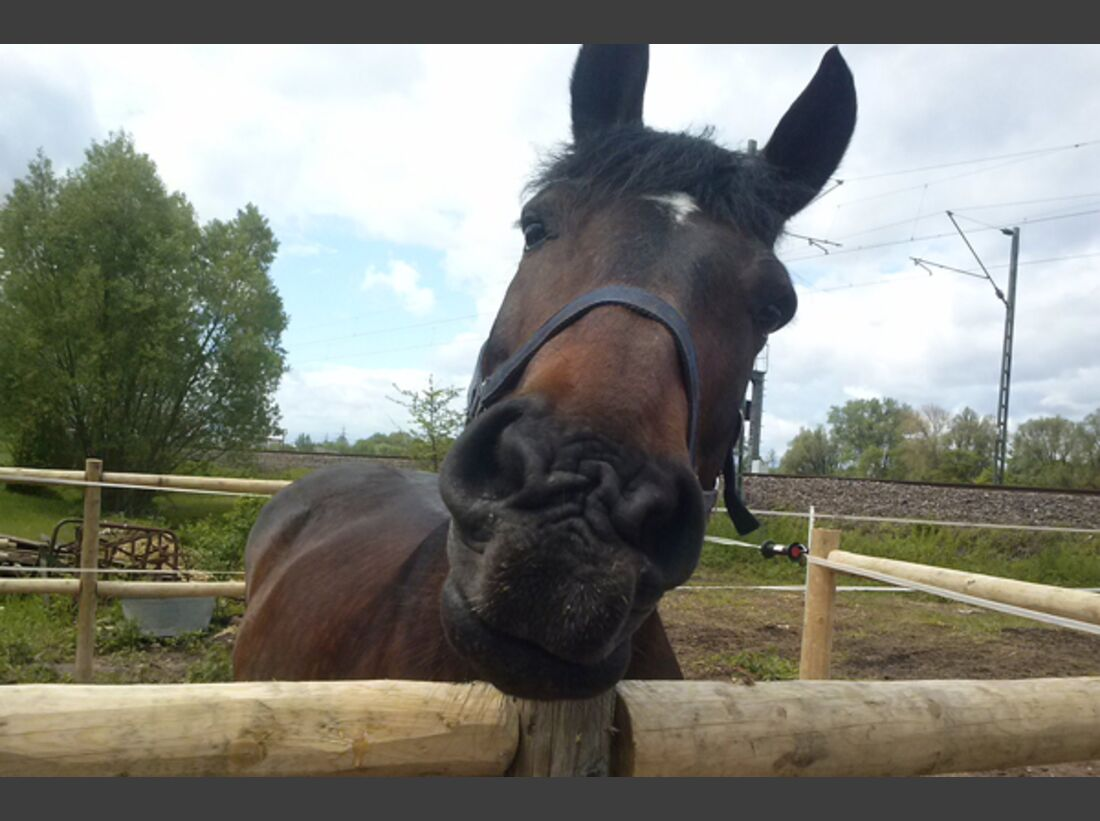 CAV Schräg Witzig Skurril aus der Pferdewelt Pferdefotos 8