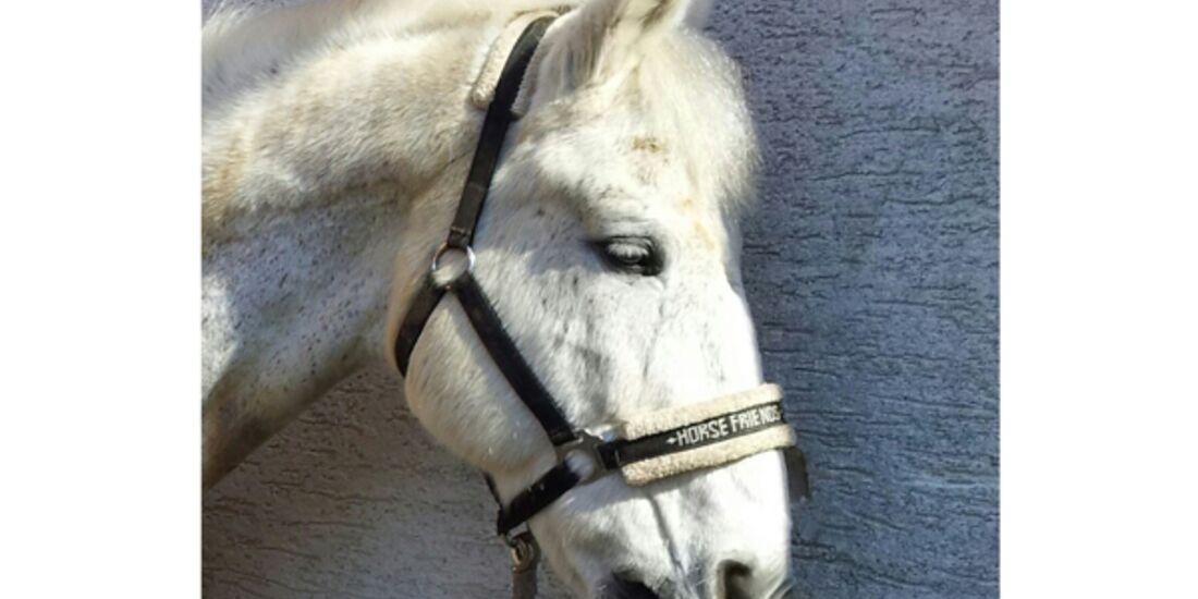 CAV Schräg Witzig Skurril aus der Pferdewelt Pferdefotos 81