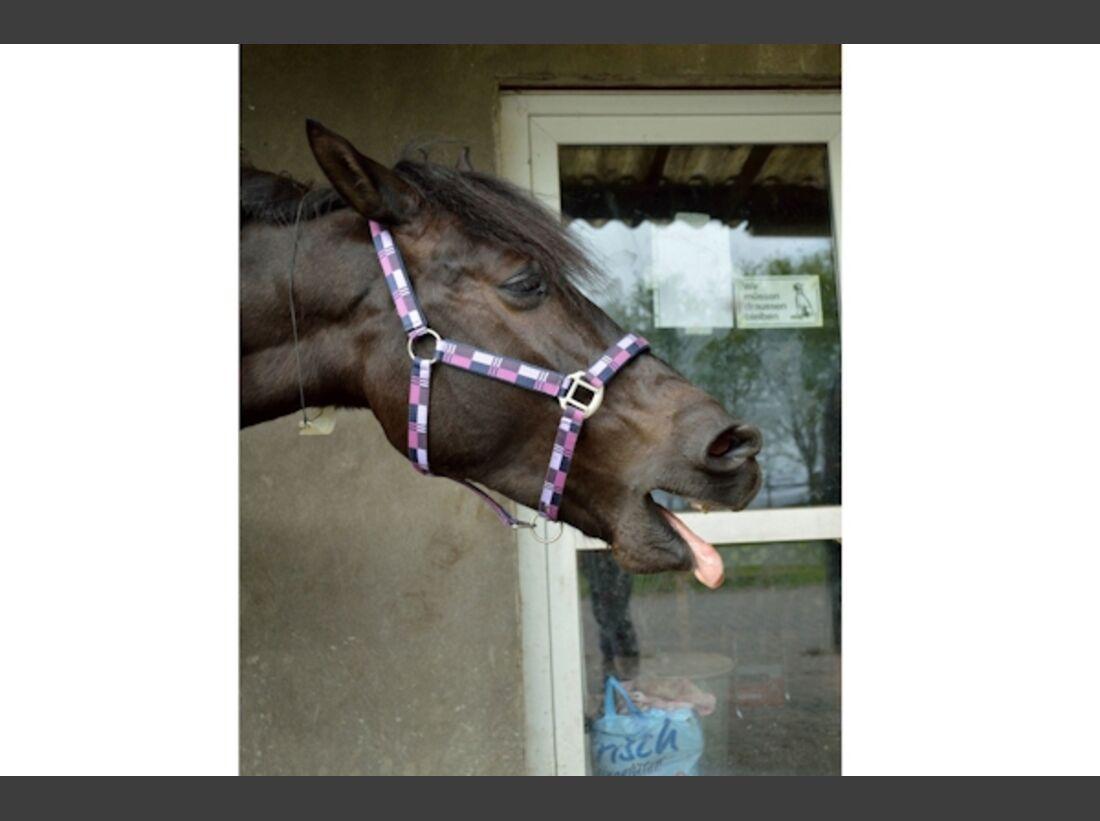 CAV Schräg Witzig Skurril aus der Pferdewelt Pferdefotos 84