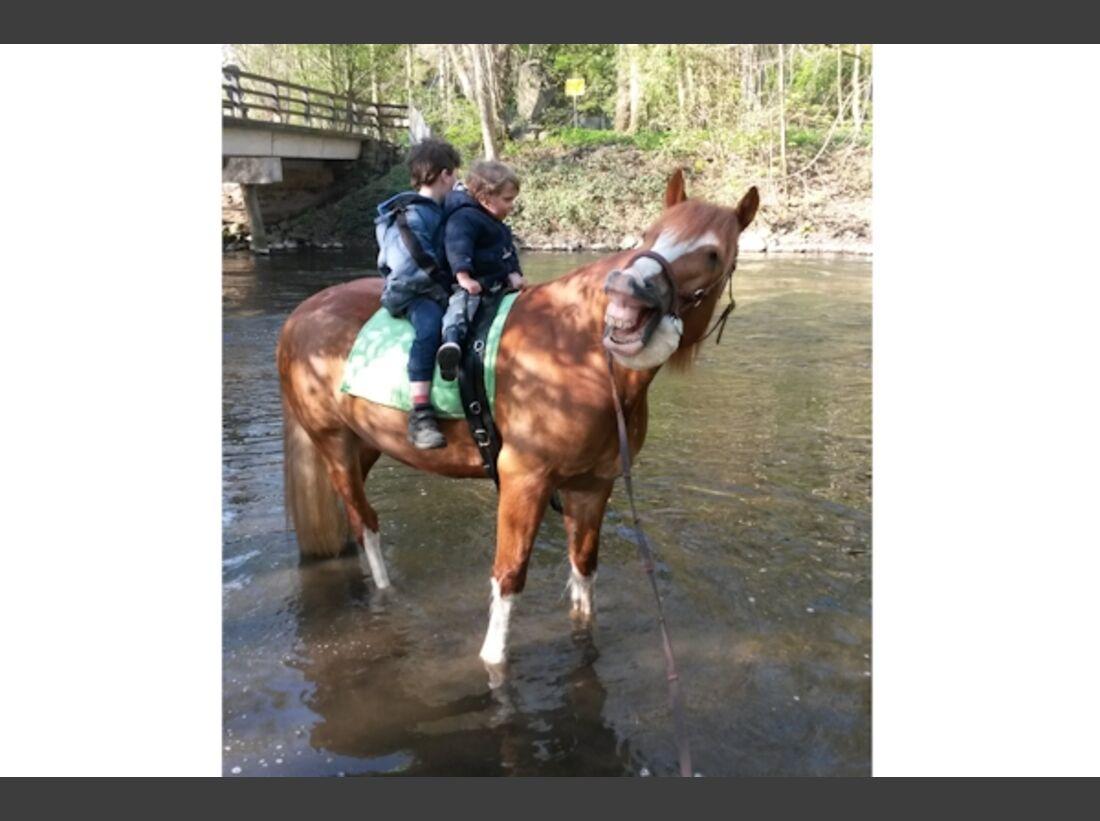 CAV Schräg Witzig Skurril aus der Pferdewelt Pferdefotos 85
