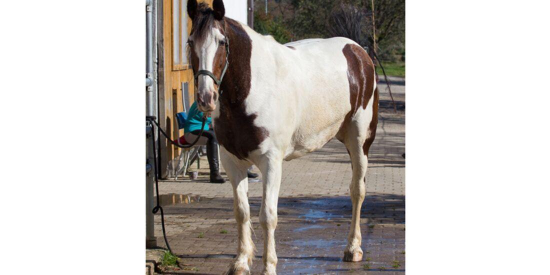 CAV Schräg Witzig Skurril aus der Pferdewelt Pferdefotos Hendrik Schulz