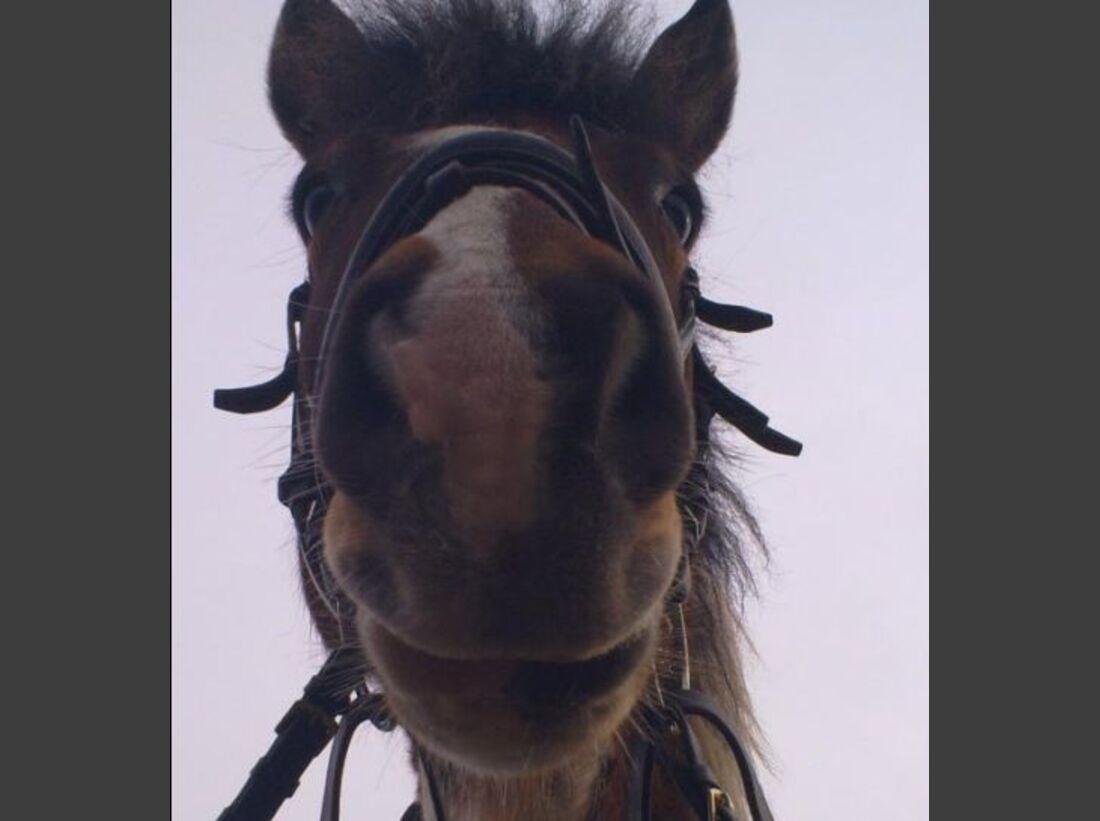 CAV Schräge Pferdefotos Brauner Kopf