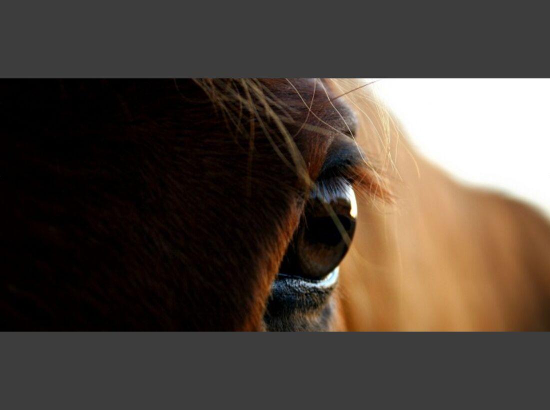 CAV Senioren  Pferdesenioren alte Pferde MS Winni
