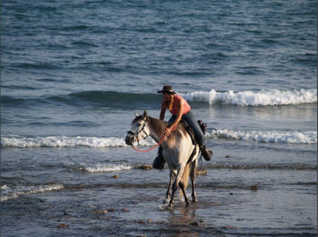 CAV Skurril Witzig Pferdefotos Aisha Wasser