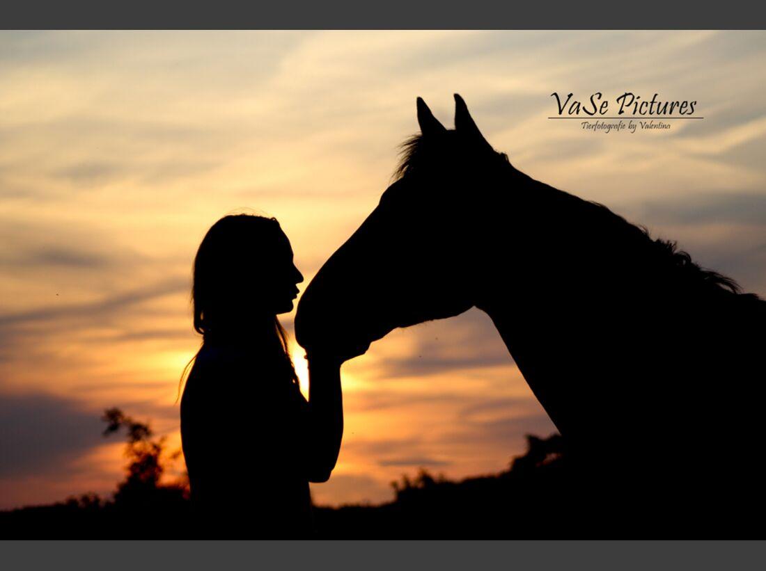 CAV Sonnenuntergang VaSe Pictures - Tierfotografie by Valentina