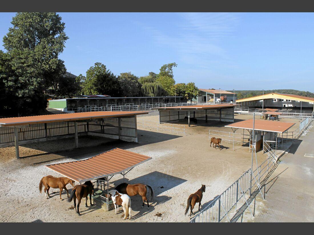 CAV Stall Scout 03_2014 Aktivstall Heinrichshof 2
