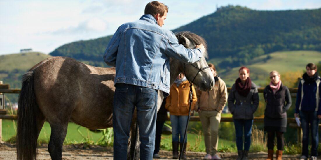 CAV Stimmung Horsemanship Florian Oberparleiter