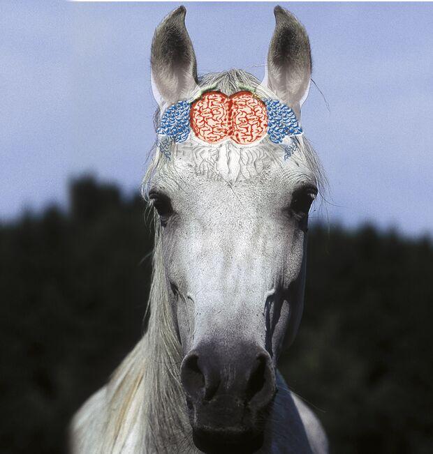 CAV Symptom-Lexikon - Gehirnerschütterung
