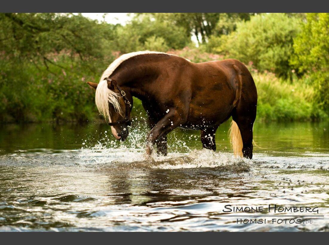 CAV Wasser Pferde Baden Leserfotos Simone Homberg