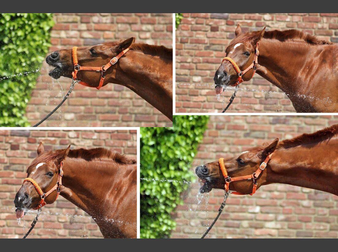 CAV Wasser Pferde baden Pablo DaSilva