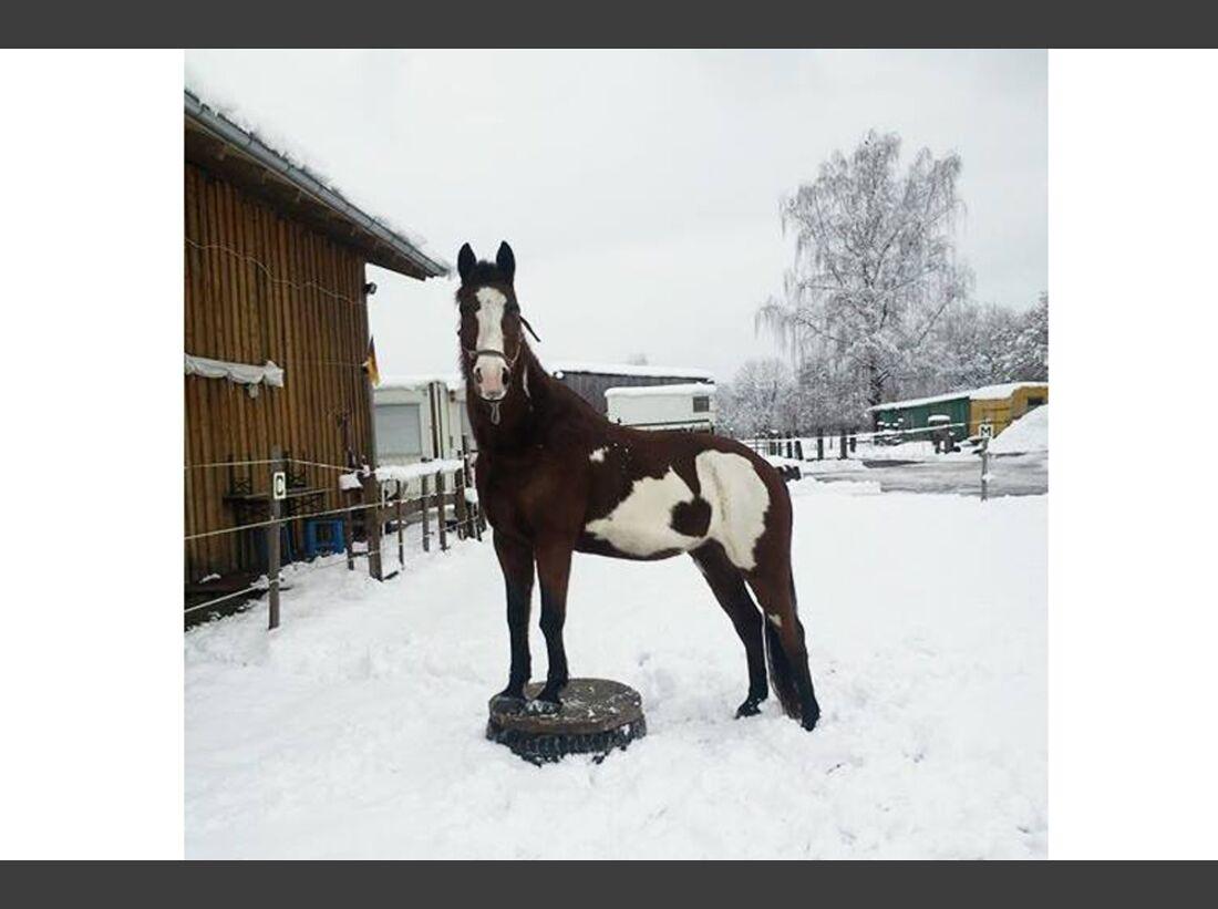 CAV Winterfotos Winter Schnee Sandra Sahne