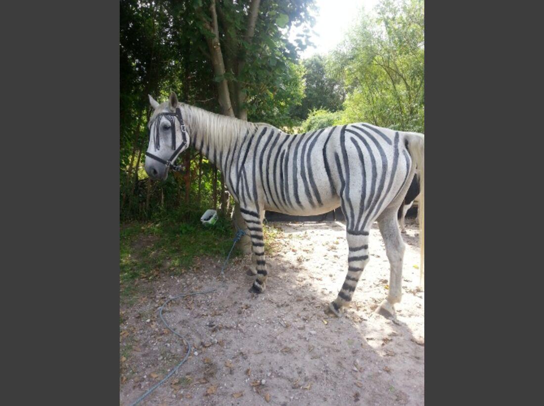 CAV Zebra Bremsen Streifen