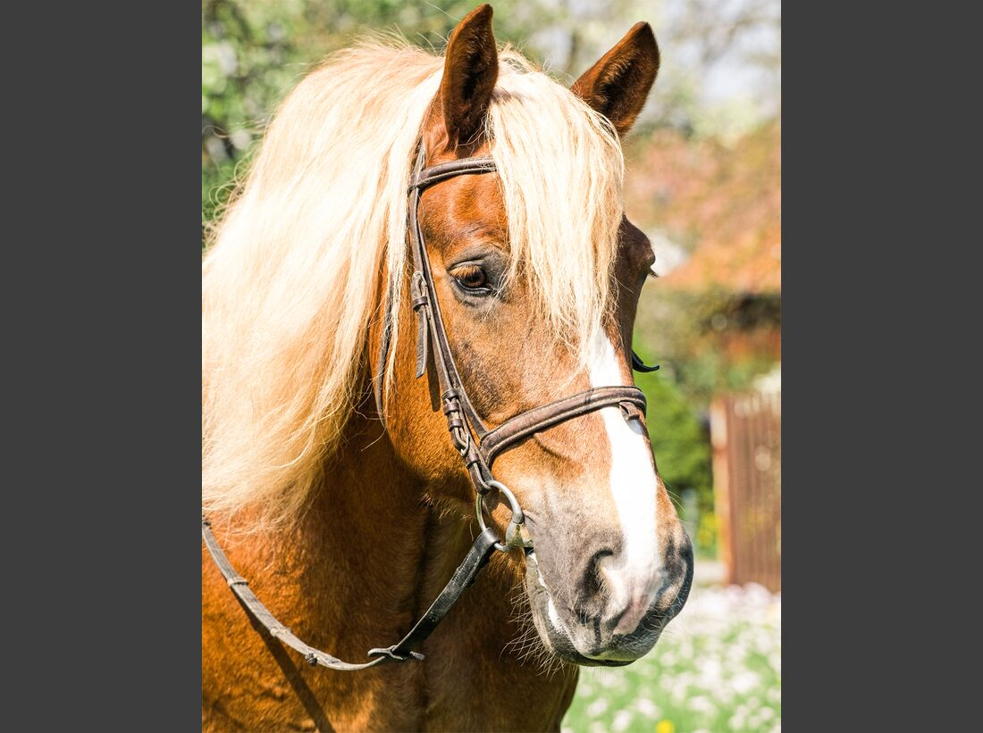 CAV alte Pferde Roman jung