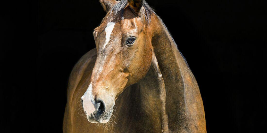 CAV alte Pferde Wallaby alt
