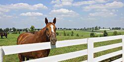 CAVALLO Kentucky  2010_Koppel01