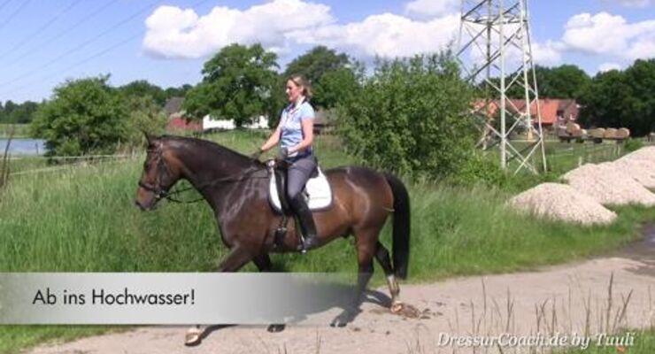 DressurCoach-Tipp 05 - Dich in kleinen Schritten mit Deinem Pferd an neue Aufgaben herantasten