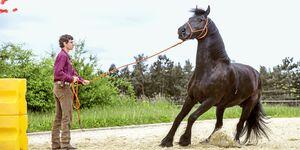 cav-201810-irrtuemer-pferdeverhalten-lir9578-mit-TEASER-v-amendo (jpg)