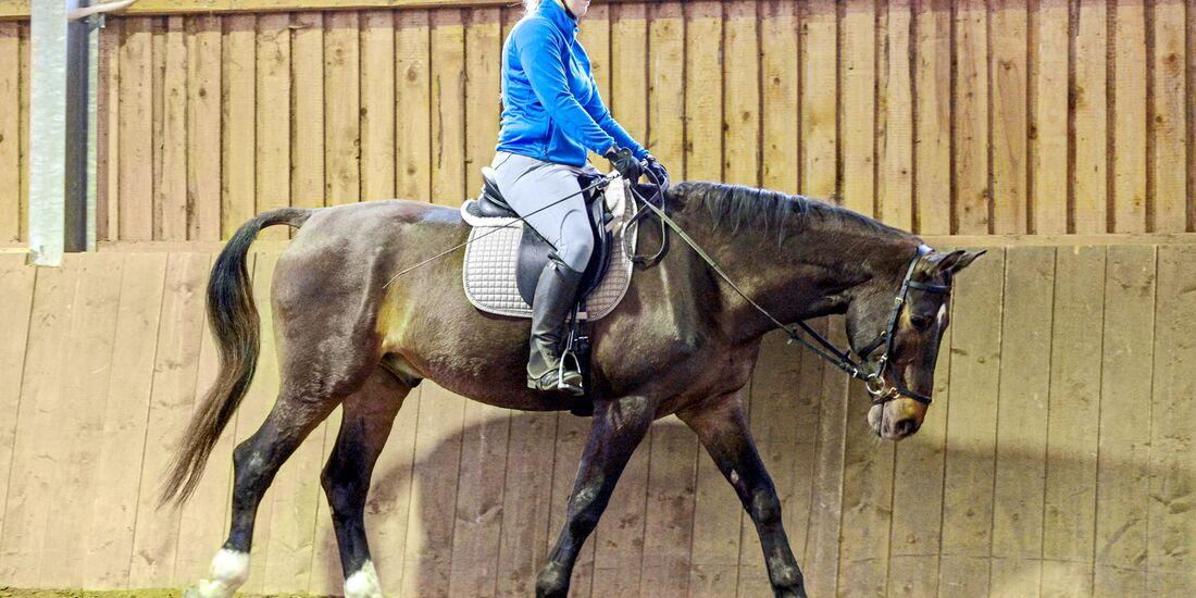 cav-201905-cavallo-coach-14-lir5988-v-amendo (jpg)