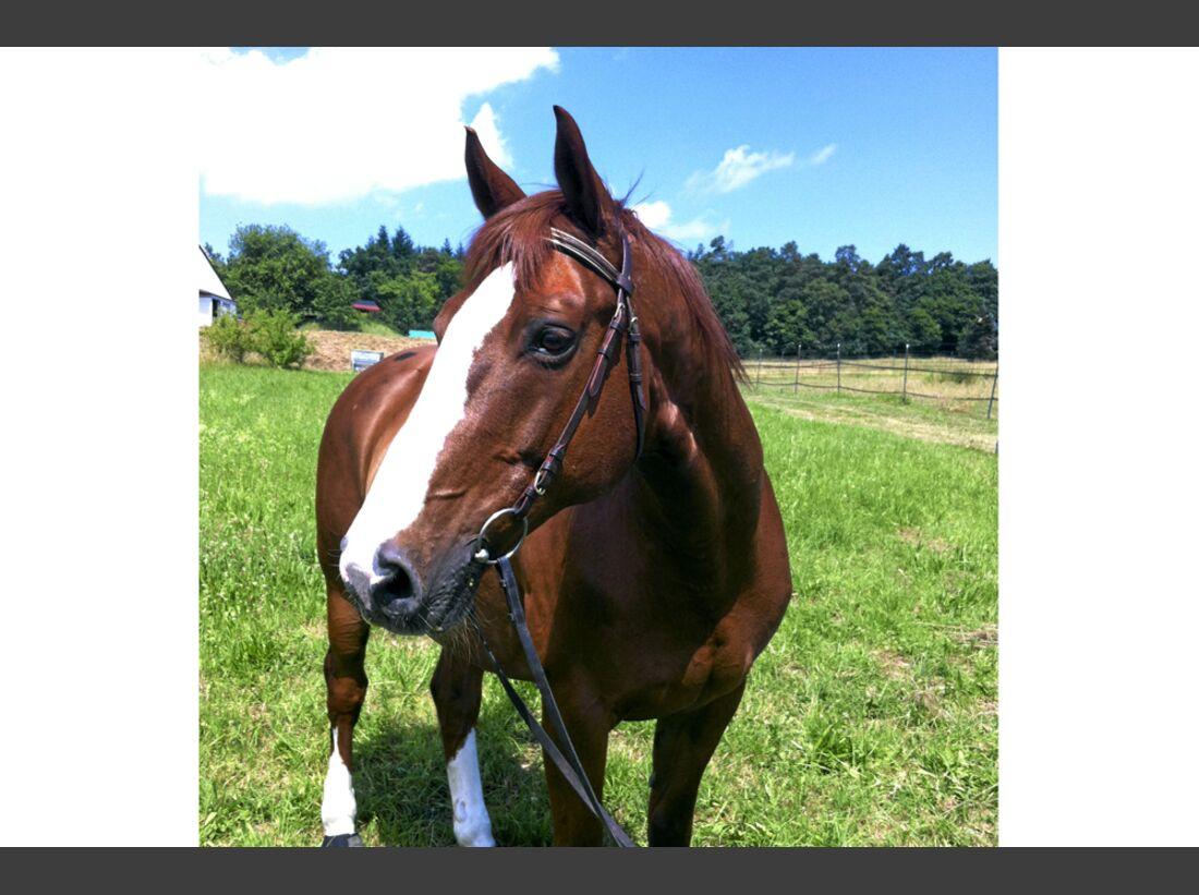 cav-pferde-fotografieren-1-handykamera-img4050-hfr-mikisch (jpg)