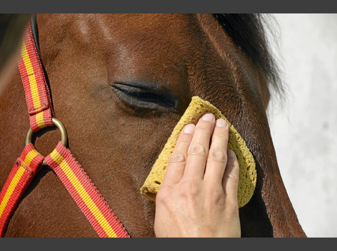 cav-pferde-fotografieren-1-lir9737 (jpg)