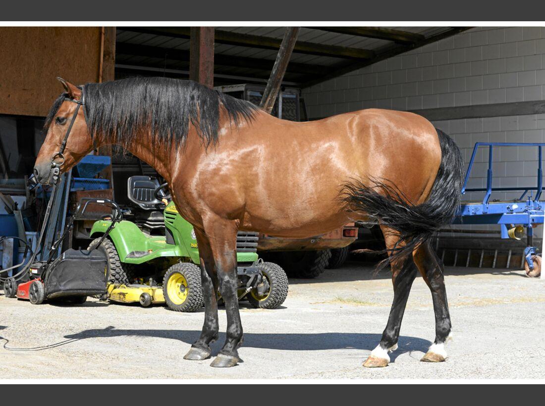cav-pferde-fotografieren-1-lir9825 (jpg)